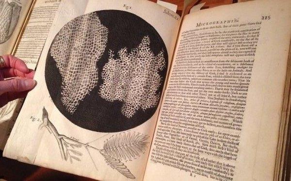 1665 The book Micrographia