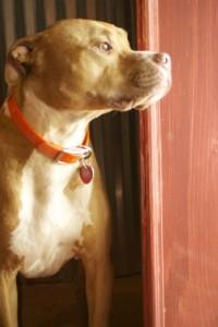 Max on guard.
