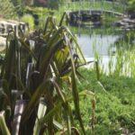 Sangria (in Jacksonville Zoo & Gardens)