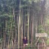 Jenks in the giant Hennon bamboo grove.