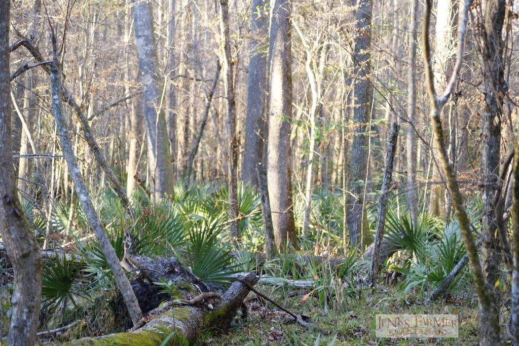 Easy to get disoriented in the dwarf palmetto & tree trunks
