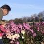 Chrysanthemum 'Miss Gloria's Thanksgiving Day.